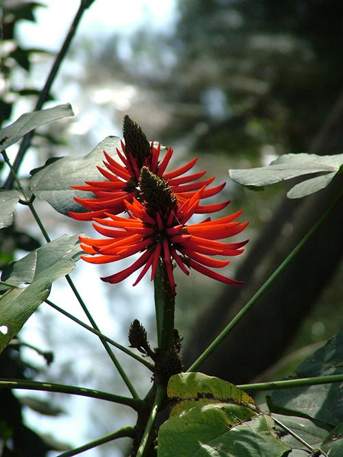 floral-(3)